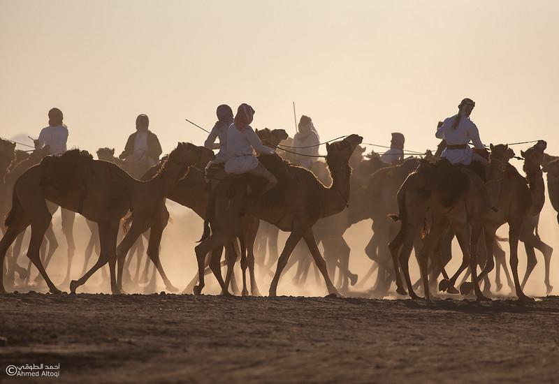 IMGL8973- Camel Race.jpg