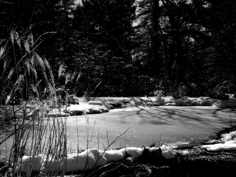 sayen snow 2.jpg