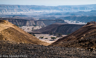 two days in the Arava