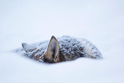 Husky tochten