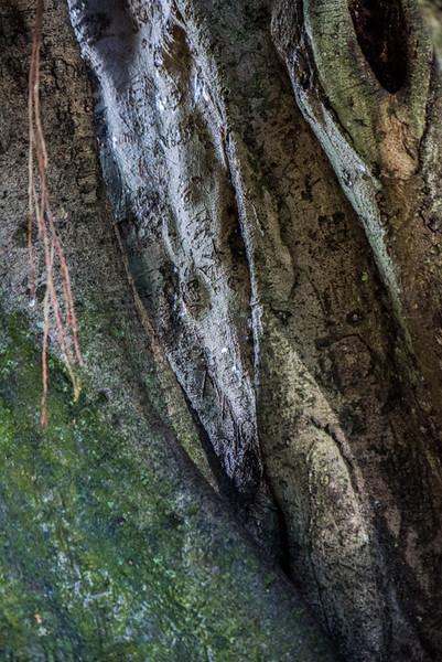 Banyan Tree 39