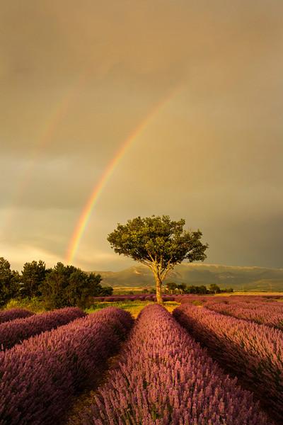 tree rainbow vert.jpg