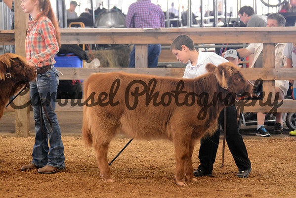 Youth Highland Show