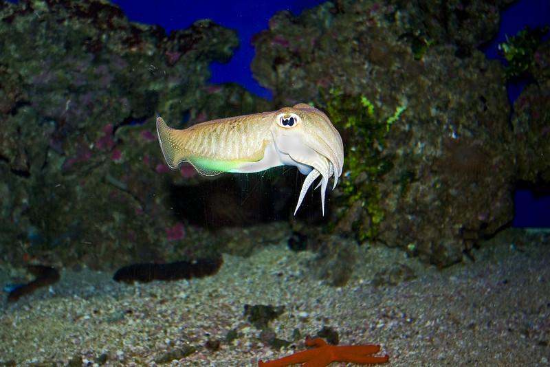 Cuttlefish 2.jpg