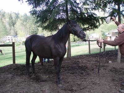 2008 - Horses