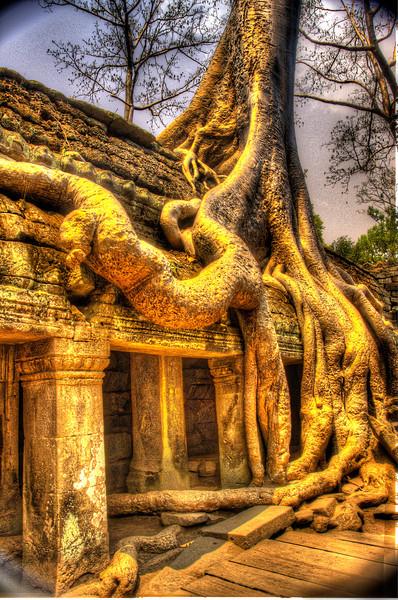 CambodiaWildRootsTaPhromDSC_4955_6_7.jpg