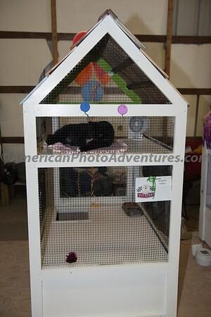 July 15 Domestic Cats