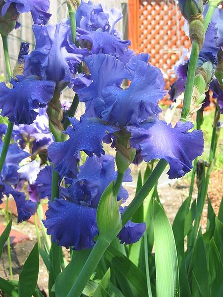 garden-2002-06-0058_std.jpg