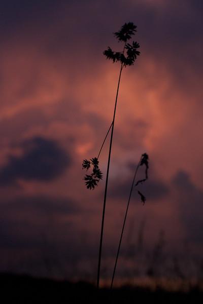 red-clouds-dawn_8777593477_o.jpg
