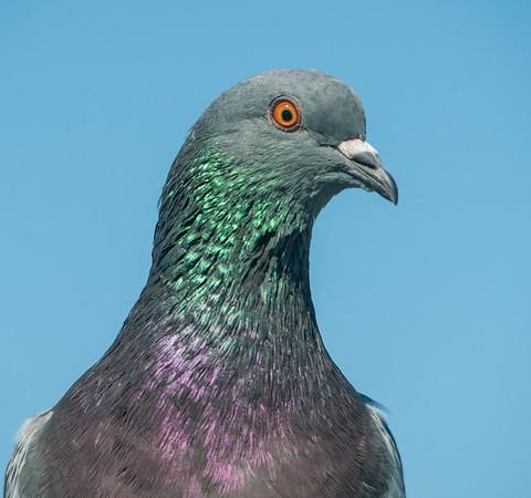 South Padre Island Birding Center