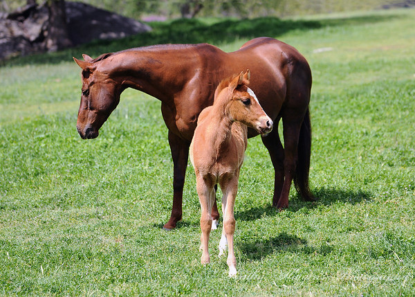 Fairlea 2013 (foals, sale horses)