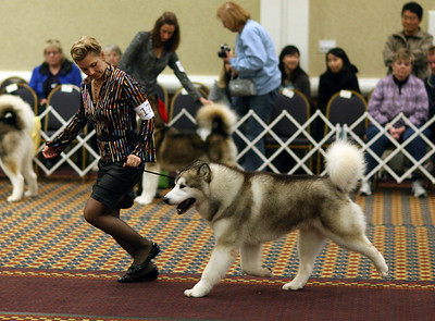 Malamute National - 2008