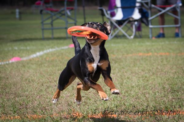 _MG_3020Up_dog_International_2016_StephaniellenPhotography.jpg