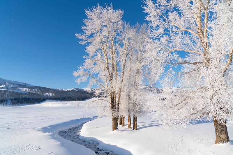 _AR71064 Lamar frosted trees & creek.jpg