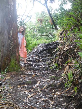 Hana Waterfalls and scenes