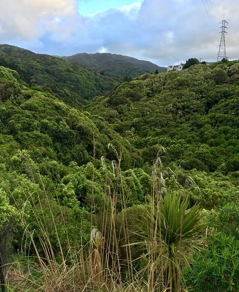 A glimpse into the Wilton Bush Reserve