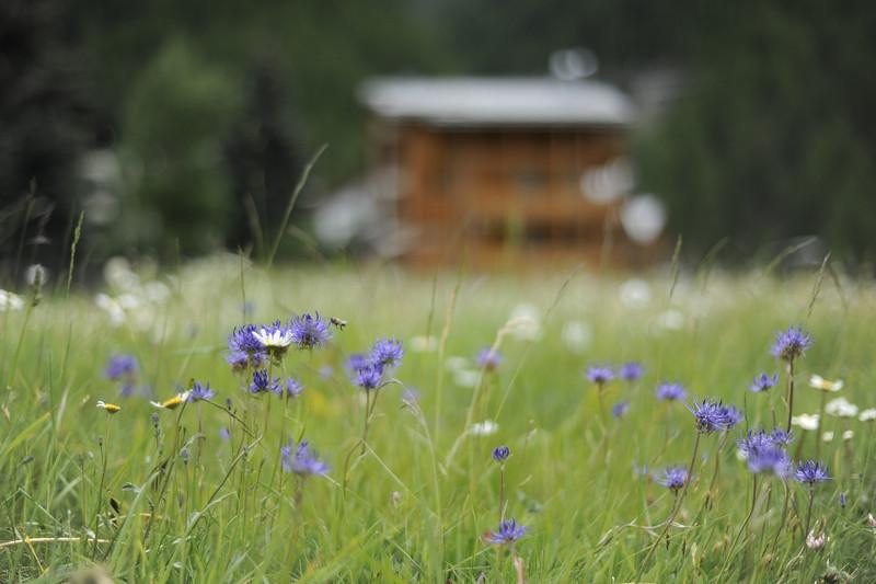Field in Zermatt, Switzerland