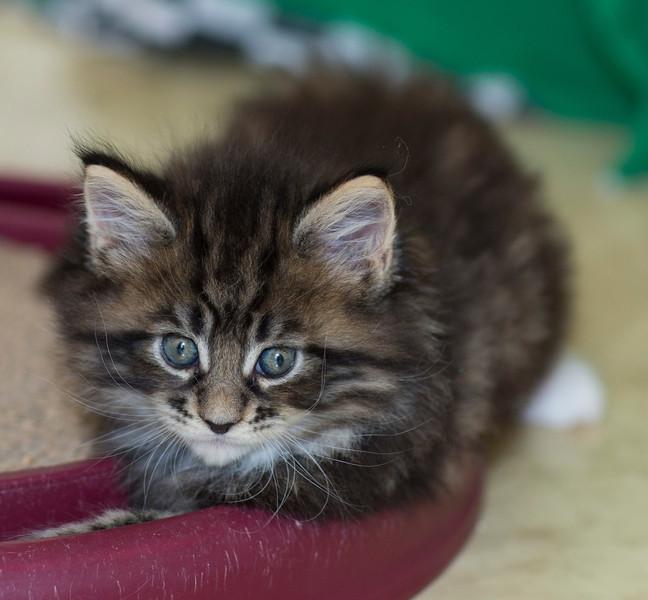 Kittens258.jpg