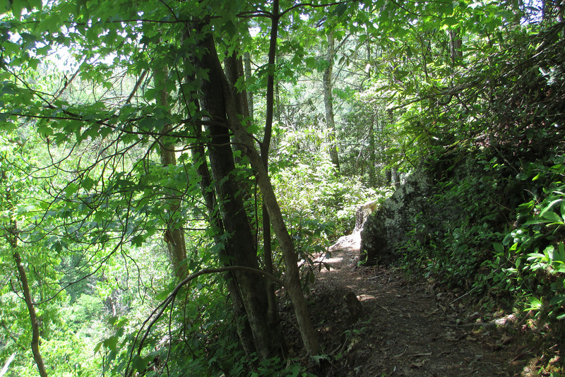 Before long the Linville Gorge Trail started to slacken off in its ascent...