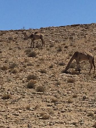 Animals of Israel