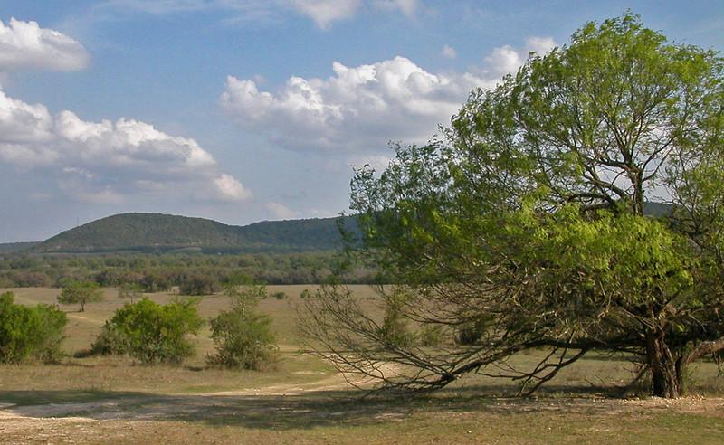 Mesquite in pasture edited.jpg