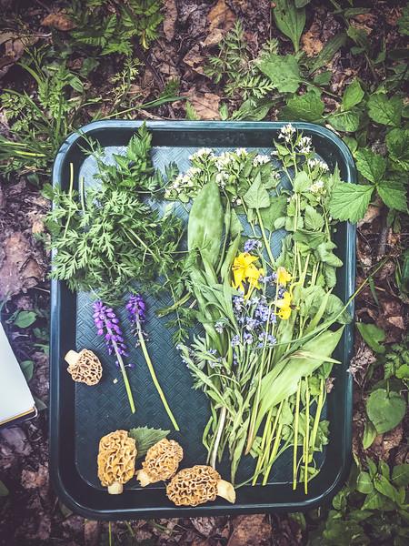 tray of foraged ingredients 2.jpg