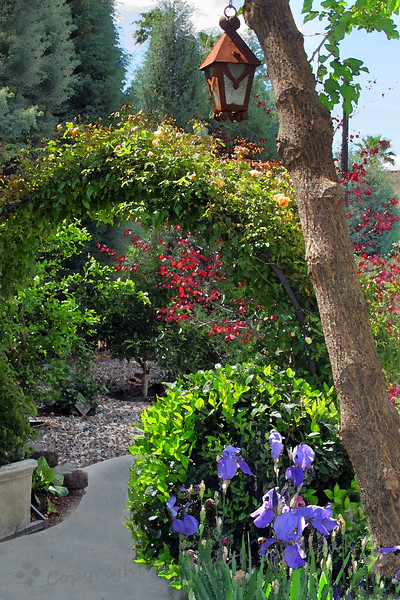 Garden View ~ Driving around in Redlands, I happened to spot this pretty garden.  I asked the owners if I could photograph it, and they generously showed me around, while I kept shooting.