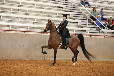 23. English Pleasure W/T Open ( Saddle or Hunt Seat, Any Breed )