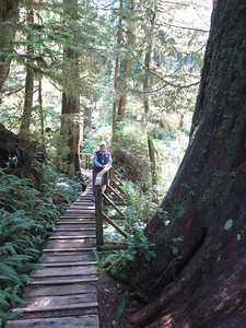 Tofino: Forest Walks