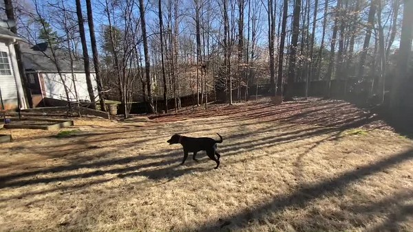 Buddy Training Video