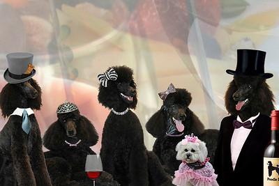 Website illustrations Poodle Day