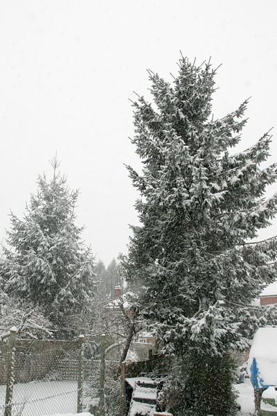 Snow 2010 099.jpg