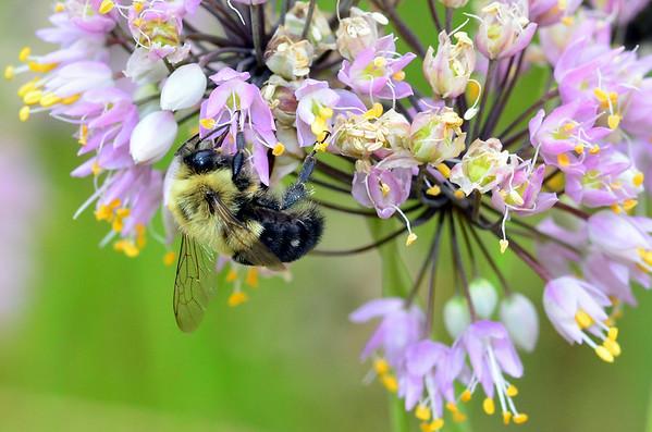 Bees 'n Bugs