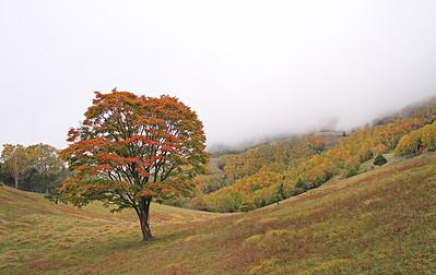 Autumn foliage 2013