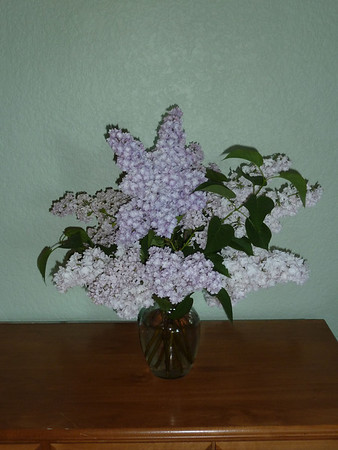 Lilacs on sideboard