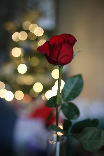 2019-12-22_ChristmasDecor-4384.JPG