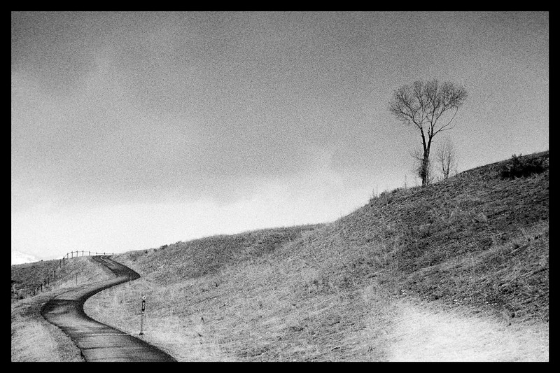 1-bike-path-Barnack-Tri-x-Rodinal-stand-dev-Elmar-50.jpg