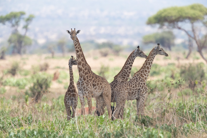 Africa - 102116 - 8252-2.jpg