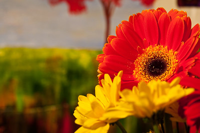 Miscellaneous Flowers