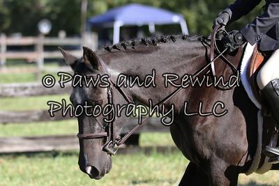Junior Hunters Under Saddle and Junior Equitation