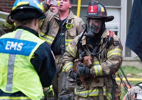 05/10/19 Wesley Bunnell | Staff New Britain Fire Department, assisted by Bristol, Hartford and Meriden, responded to a fire in an apartment building at 180 Allen St on Friday afternoon which appeared to be located on the third floor. A New Britain Firefighter carries a small dog which appeared to be uninjured out of the building and hands the dog to an EMS worker for oxygen.