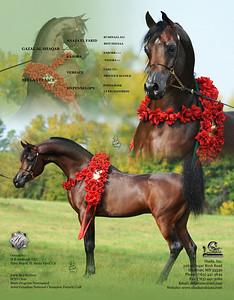 Stallion Card Designs