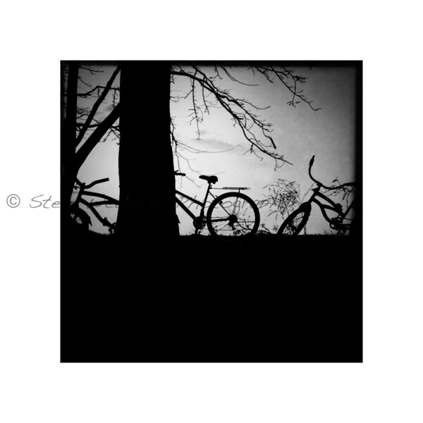 Bikes and Trees.jpg