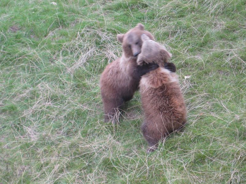bears_08.jpg