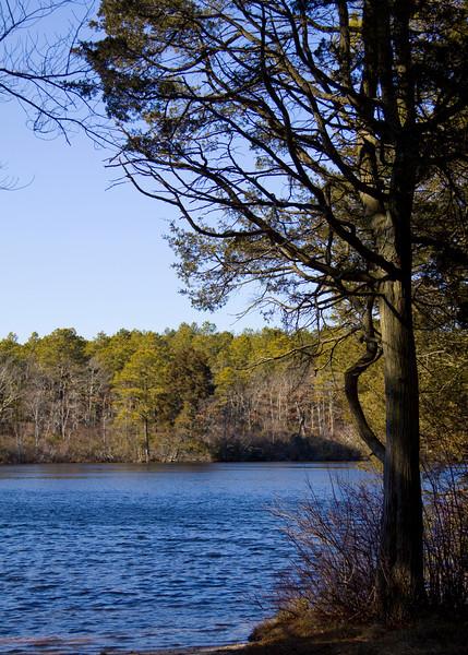 Paumanouk Trail, Sears Pond, Sears-Bellows County Park, Southampton N.Y. - 02/13/2012