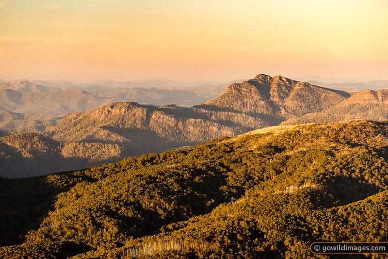 Mt Cobbler Gold
