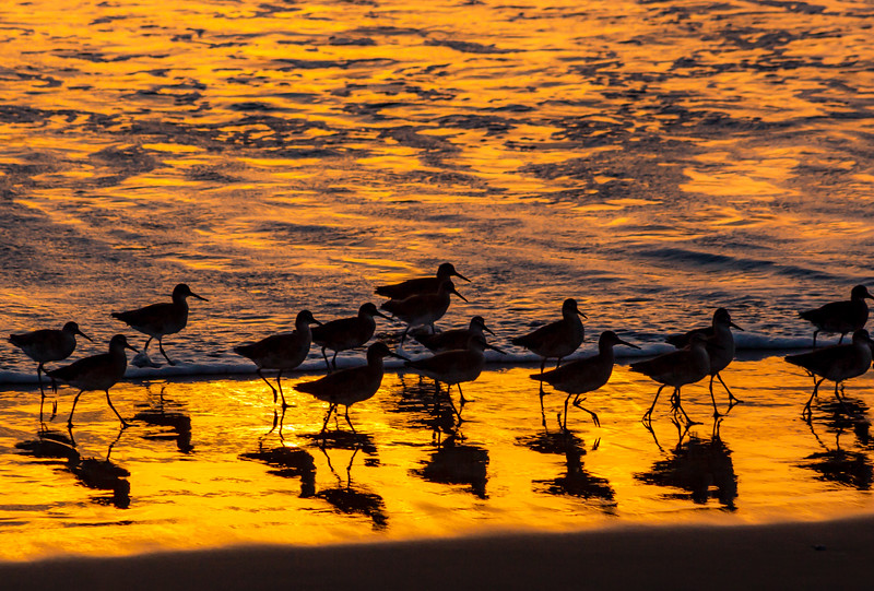 sunset birds resized.jpg