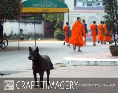 Dog Galleries
