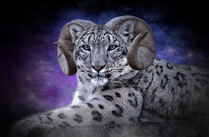 MCC4 Don_Berthman_Cosmic_Cat.jpg