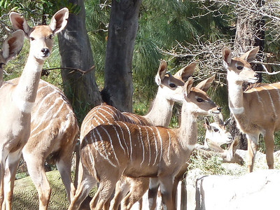 Conny & The Kudu's